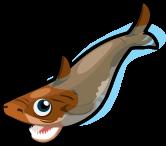 Cookie cutter shark single
