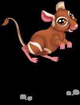 Kangaroo rat an