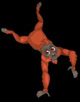 Borneo orangutan an