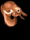 German red squirrel an