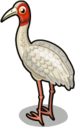 Sarus crane single