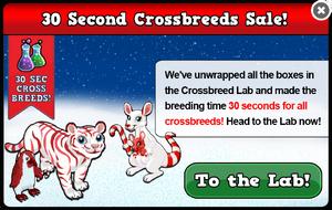 Winter crossbreed sale modal