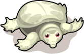 Albino Soft-Shelled Turtle single