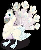 Bright albino peacock single