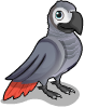 African grey parrot static
