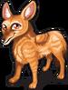 Golden jackal single