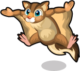 Flying Squirrel single
