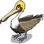 Brown pelican static