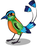 Motmot bird static