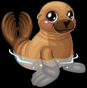Galapagos fur seal single