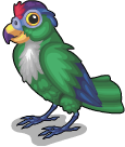 Green cheeked parrot static