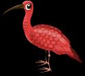 Scarlet ibis single
