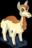 Llama single