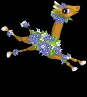 Hydrangea giraffe an