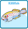 Killifish card
