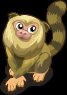 Pygmy Marmoset single