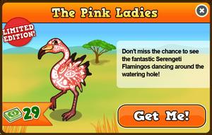 Serengeti flamingo modal
