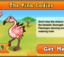 Serengeti Flamingo