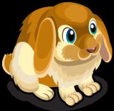 Lop Eared Bunny single