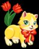 Tulip kitten single