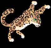 Himalayan snow leopard an