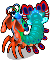 Mantis shrimp single