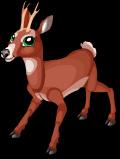 Roe deer static