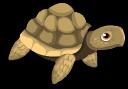 African tortoise an