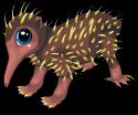 New guinea echidna static