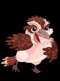 Outback kookaburra an