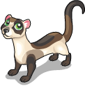 Black footed ferret static