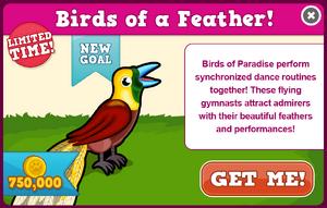 Bird of paradise modal