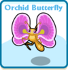 Orchid butterfly card