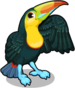 Keel billed toucan single
