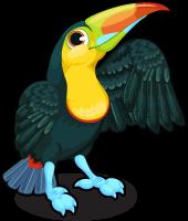 Keel billed toucan single