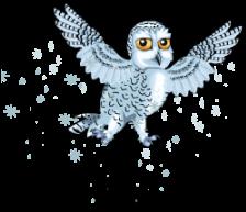 Arctic snowy owl an
