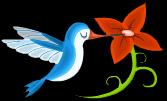Elegant hummingbird static