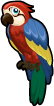 Macaw single