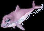 Harbor porpoise single