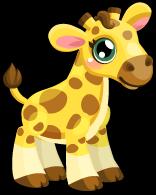 Cubby giraffe common single