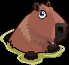 Capybara single
