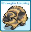 Norwegian lemming card