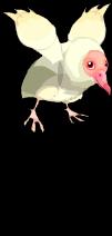 Albino black vulture an
