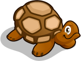 Red Footed Tortoise single