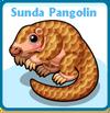 Sunda pangolin card