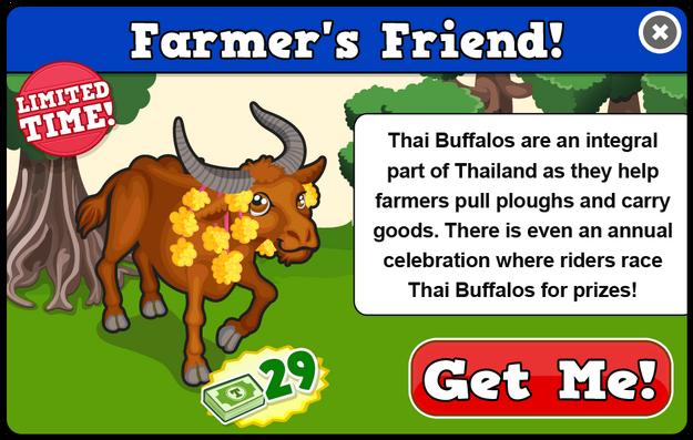 Thai buffalo modal