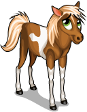 Miniature horse an
