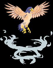 Peregrine falcon an