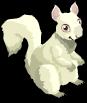 Albino squirrel static