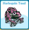 Harlequin toad card